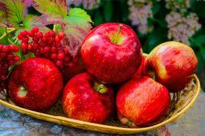 میوه های قرمز